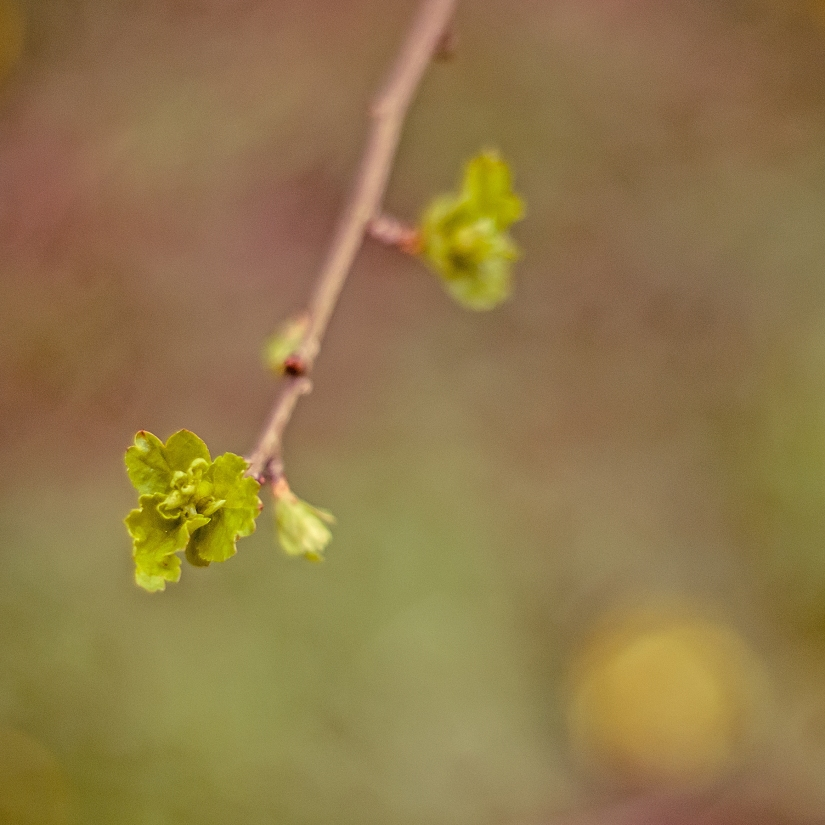 Signs of spring and allthat