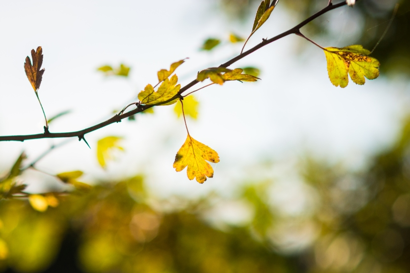 Of light andleaves